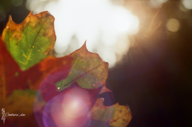jesienne liście, kolory jesieni