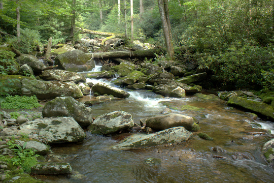 A remote brook trout stream in the Great Smoky Mountains National Park.