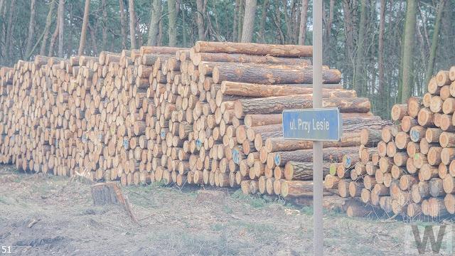 Wycinka drzew pomiędzy Pawłówkiem a Tryszczynem, obwodnica Bydgoszczy