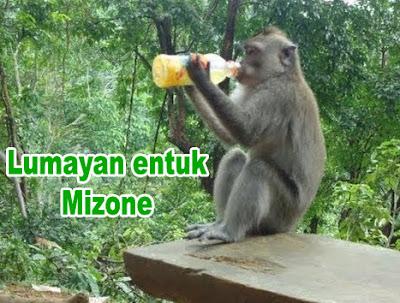 monyet sedang minum lucu