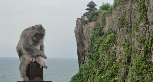 Uluwatu Bali Cliff Temple and Holy Monkey Forest
