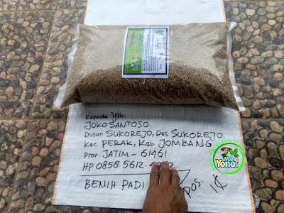 FOTO 1 : Benih Padi TRISAKTI   Pesanan Joko Santoso Sebelum di Packing