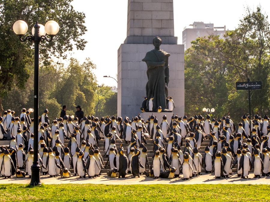 Street Art   1000 pingüinos