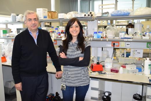 Investigadores del CIPF identifican mecanismos por los que la neuroinflamación induce alteraciones motoras
