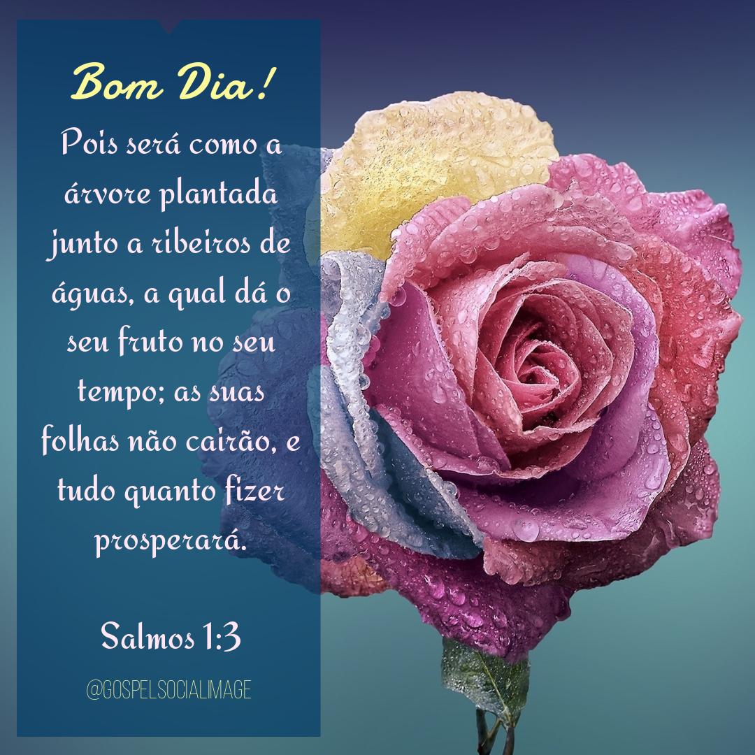 Imagem Deus Frases De Bom Dia Salmos 13 Imagens Bíblicas