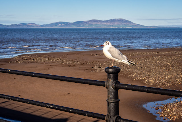 Photo of a gull perching on a post on Maryport pier