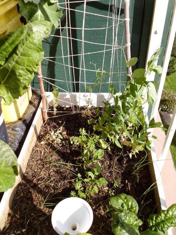 Subirrigated planter