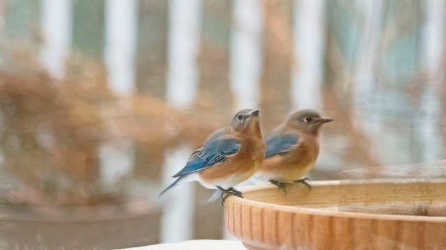 Bluebird Tea Room St Margarets Opening Times