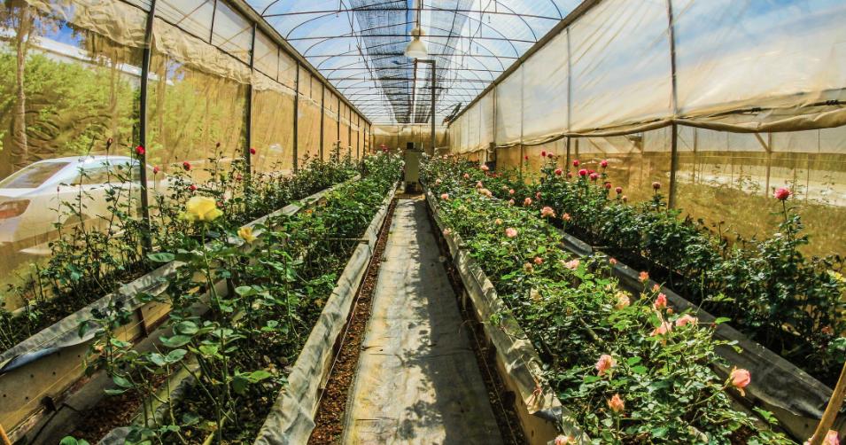 indoor gardening vegetables year round How To Grow Vegetable Indoors All Year Round