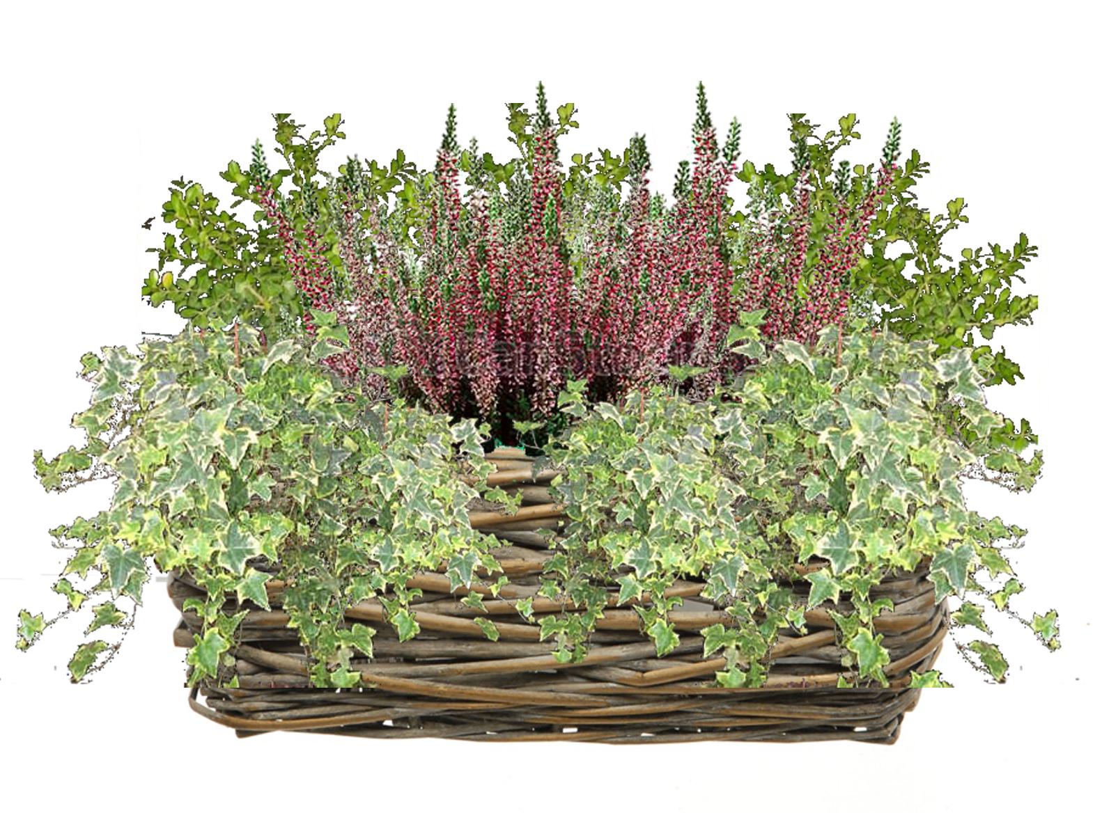 Il balcone d 39 inverno sfumature verdi for Piante invernali da esterno vaso