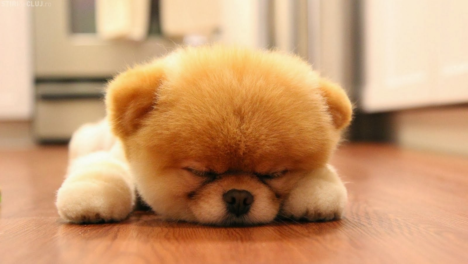 fluffy baby dogs -#main