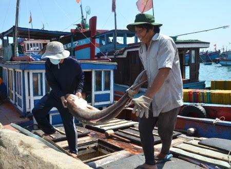 Ngư dân Quảng Ngãi gượng dậy sau mỗi chuyến biển bất thuận, tiếp tục vươn khơi mang sản vật của đại dương về đất liền vun đắp cho những mùa xuân tươi đẹp.