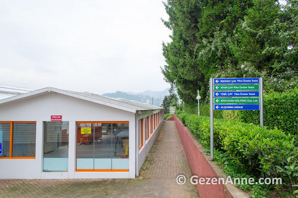 Çaykur ziraat botanik bahçesinde çay üretimi pilot tesisi, Rize
