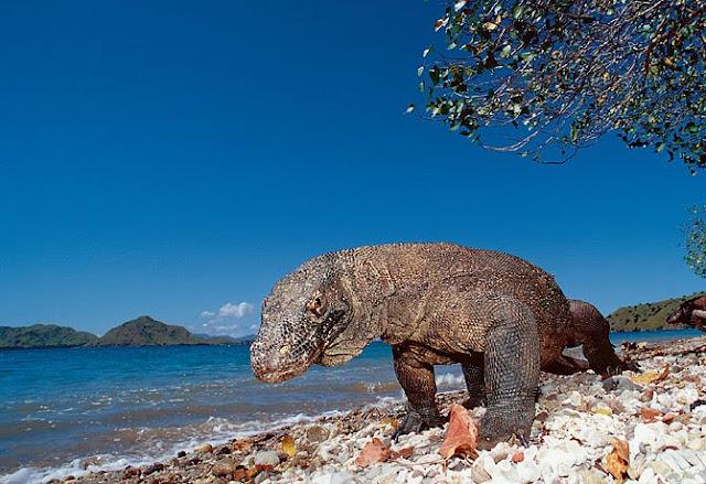 Pulau Komodo Indah