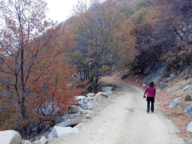 Cerro El Roble Chile