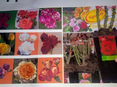 Potplants:  Δημιουργήστε τον Κήπο των αισθήσεών σας με τριανταφυλλιές και όχι μόνο!!! Γούναρη 247 & Γληνού 1, Γλυφάδα Αττική 2130360239