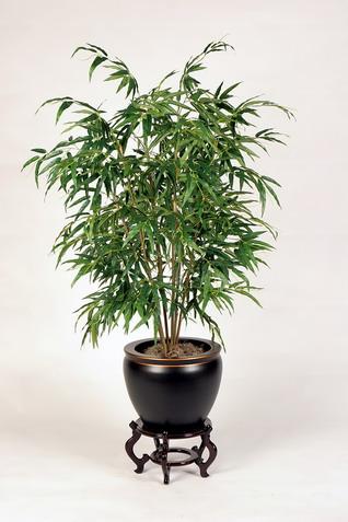 6 plantas de interior que te protegen del mon xido de for Plantas para dormitorio feng shui