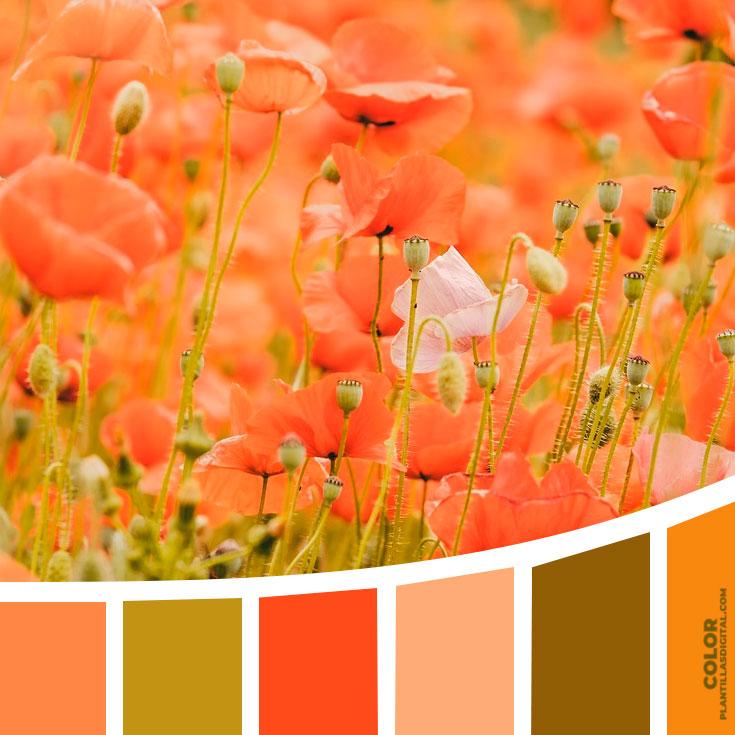 color_129