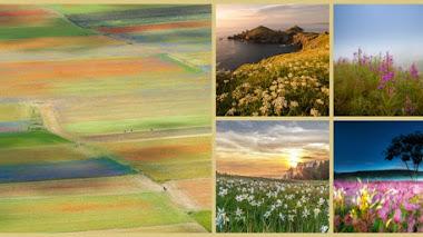 Paisajes de flores silvestres. Fotos premiadas en IGPOTY N.10 Wildflower Landscapes