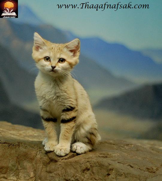 أجمل صغار الحيوانات في الصحراء