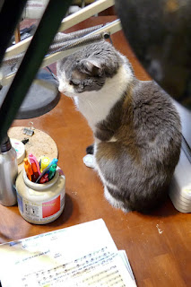 Spackle Puss, the cat, on my desk