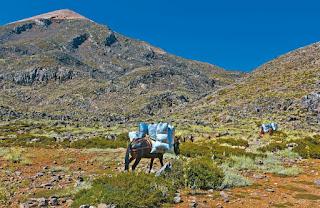 Αλβανοί αλωνίζουν τα ελληνικά βουνά & αφανίζουν τα αρωματικά φυτά. ΑΠΕΙΛΗ ΓΙΑ ΤΗ ΧΛΩΡΙΔΑ
