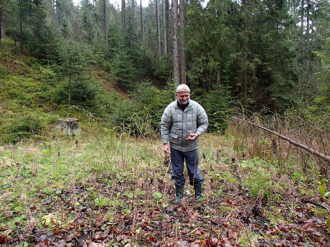 Wiosenne grzyby, grzyby w kwietniu, grzybobranie w kwietniu, grzybobranie na Orawie, wiosenne grzyby Orawy, smardzowanie, smardzobranie, szukanie smardzów, gdzie rosną smardze, smardz stożkowaty Morchella conica