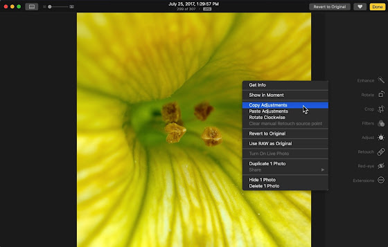 Copy Adjustments in Apple Photos