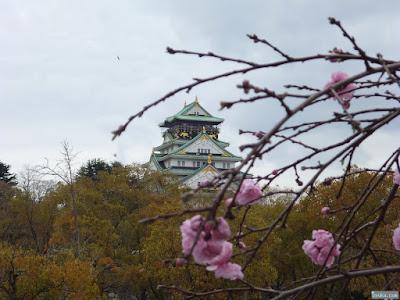 大阪城と八重桜