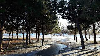 Parc Jarry, arbres, neige qui fond
