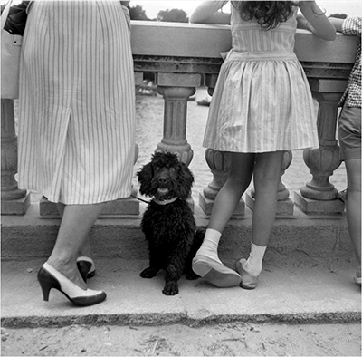 http://joeinct.tumblr.com/post/155320435852/poodle-photo-by-francesc-catal%C3%A0-roca