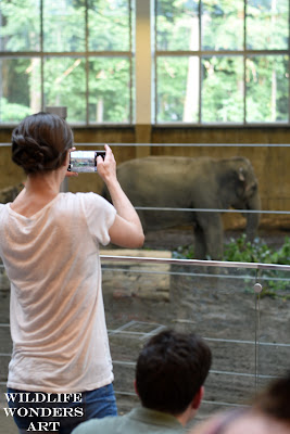 woman taking cell phone picture of zoo elephant