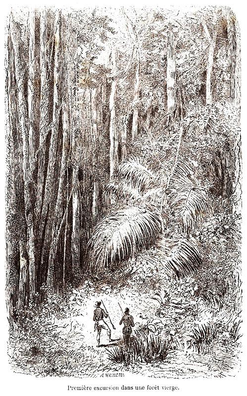 a floresta virgem estação capixaba