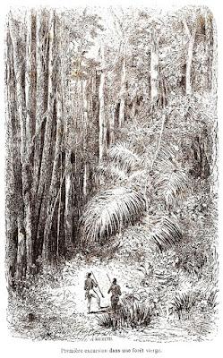 Primeira excursão numa floresta virgem.