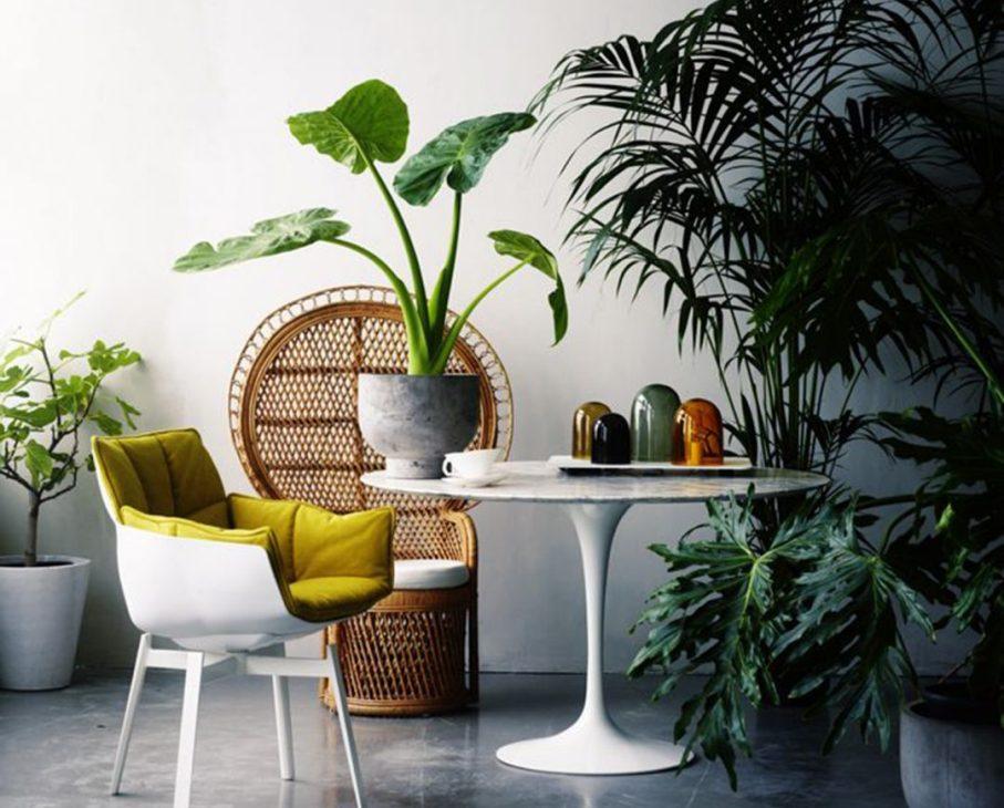 Pensapulito e arreda con le piante cosa comprare al for Bonsai comprare