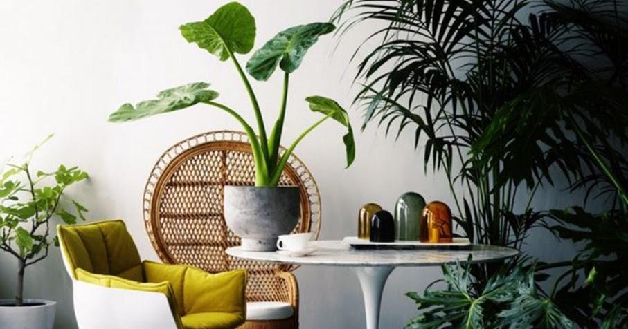 Pensapulito e arreda con le piante cosa comprare al for Piante da comprare