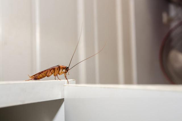 8 Φυσικοί Τρόποι για να Εξοντώσεις τις Κατσαρίδες στο Σπίτι!