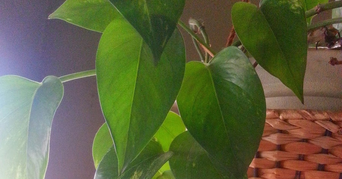 Taking Root, Houseplants to Share