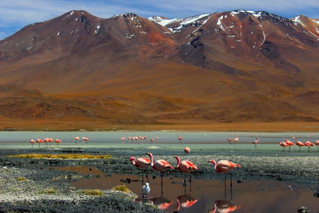La Laguna Honda, una de las 'Joyas Alto Andinas' de Bolivia