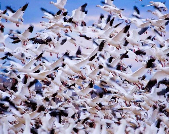 ـكثر 10 صور مذهلة لهجرة الحيوانات