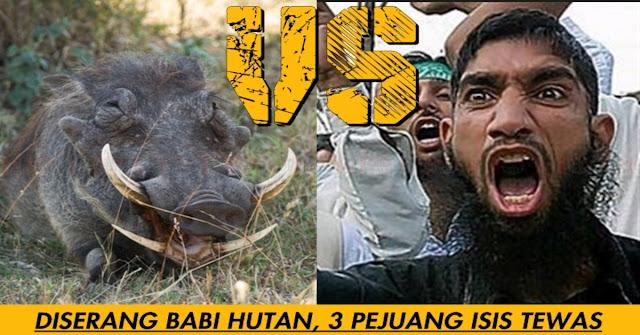 TRAGIS !! 3 Teroris Isis Tewas Diserang Babi Hutan !!