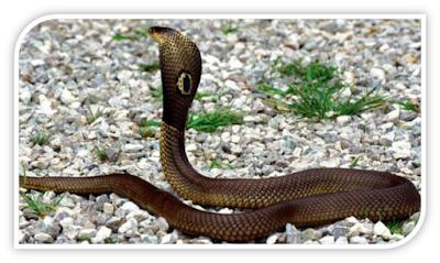 ular dengan kemampuan membunuh luar biasa