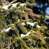 Dit moet je weten over het ophalen en inleveren van kerstbomen in Utrecht