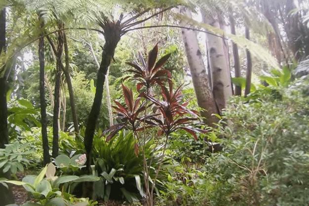 Interior del Botánico, de gran biodiversidad vegetal