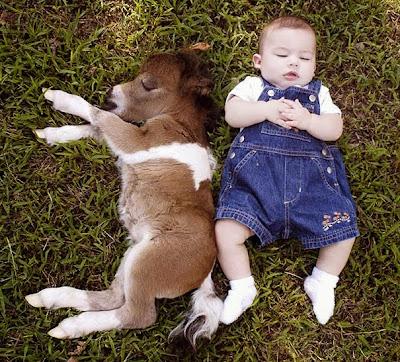 Un hermoso bebé con un poni ambos dormidos.