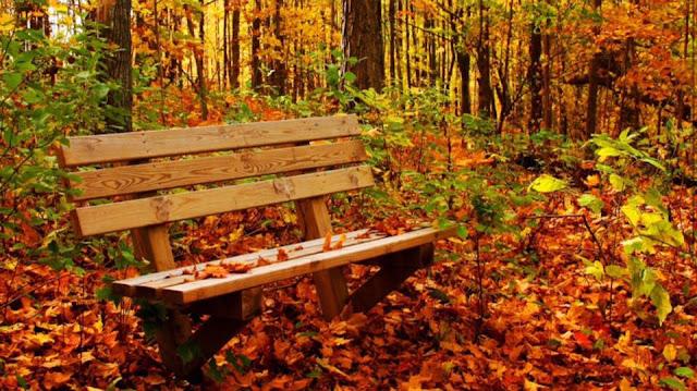 الخريف واللا حب