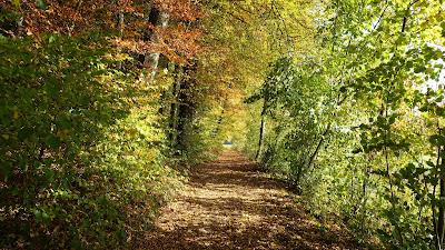 Herbstlicher Weg nahe Niederönz