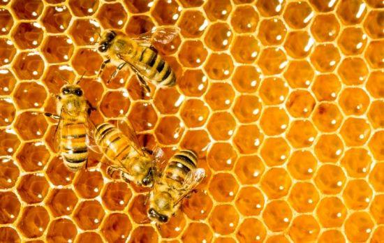 Πωλείται μέλι πεύκου και μέλι βελανιδιάς φετινού τρύγου σε τενεκέδες