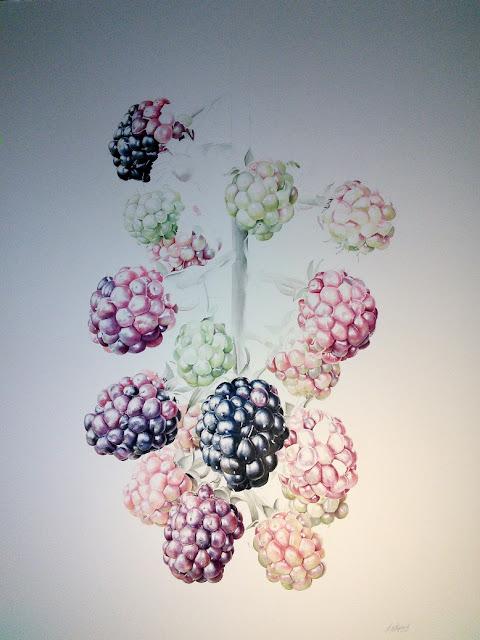 Blackberry branch (Rubus ulmifolius)