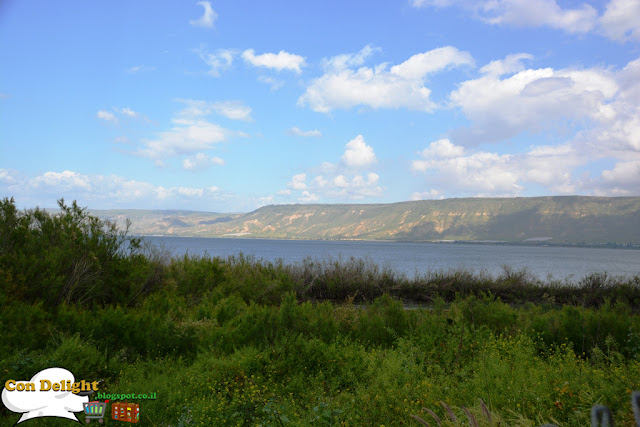 Near the shores of Galilee sea ליד חופי הכנרת